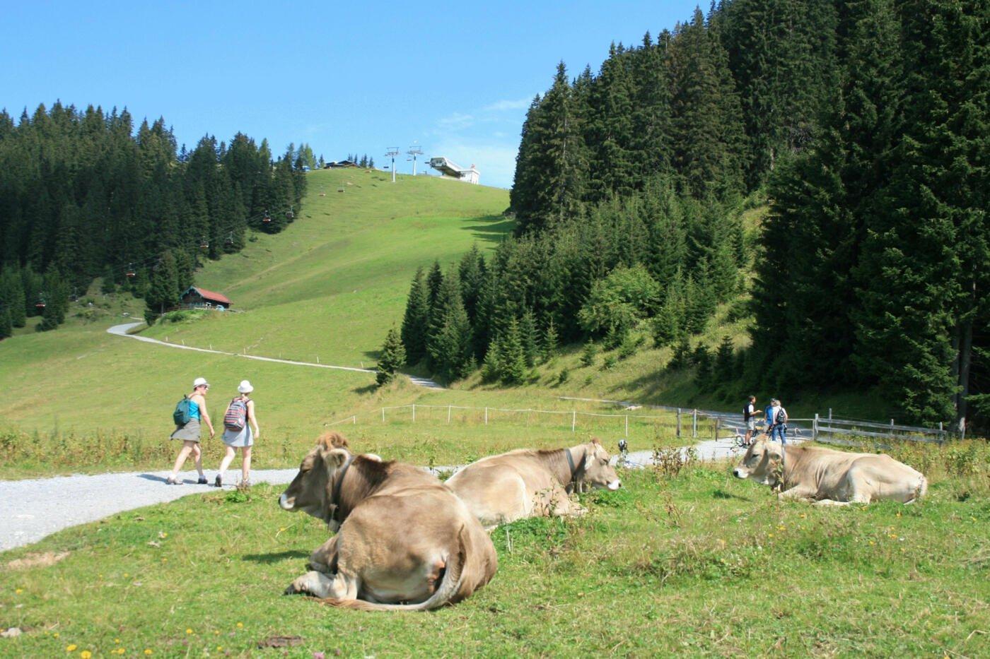 Berwang: Hiking with the Bergbahnen Berwang – Tiroler Zugspitz Arena
