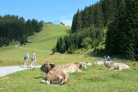 Cows at a mountain pasture